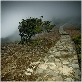 Pico Ruivo - Avoidance by yv