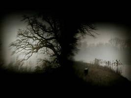 Stillness 3 by yv