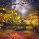 shroud of fall by yv