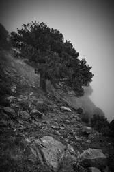 Pico Ruivo - Tilt by yv