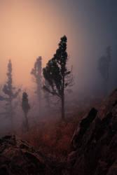 Pico de la Gorra 1 by yv