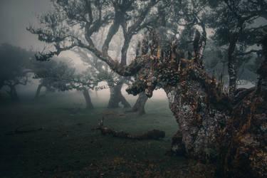 deer tree by yv