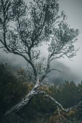 Pico Ruivo - Bind by yv
