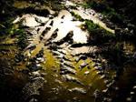 -reflective- by calcross