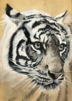 Tiger on Wood by xabigal-eyesx
