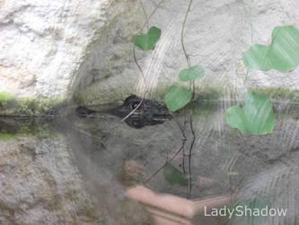 .: Alligator :. by X-LadyShadow-X