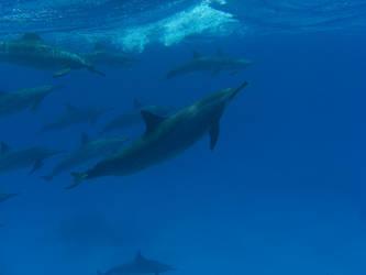 Dolphins by X-LadyShadow-X