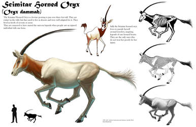 Scimitar Horned Oryx Sheet by Tikall