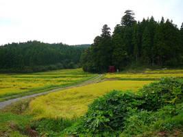 Rice Field Torii by katters