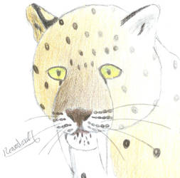 Smilodon-formidable by roarodon07
