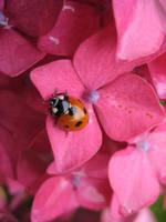 Ladybird2' by RachelDunn