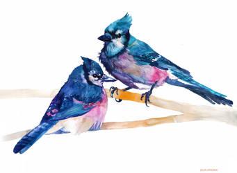 Blue Jays by takmaj