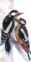Woodpeckers by takmaj