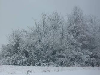 White Trees by darksykkurai