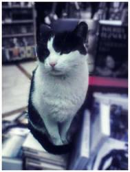 cat - books lover by Sandrita-87