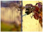 Hanging garden by Sandrita-87