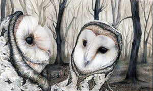Owls and birches by searoth