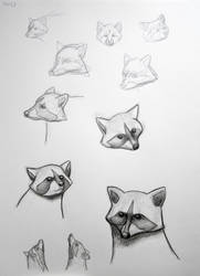 Racoons by lunejaune145