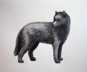 Wolf by lunejaune145