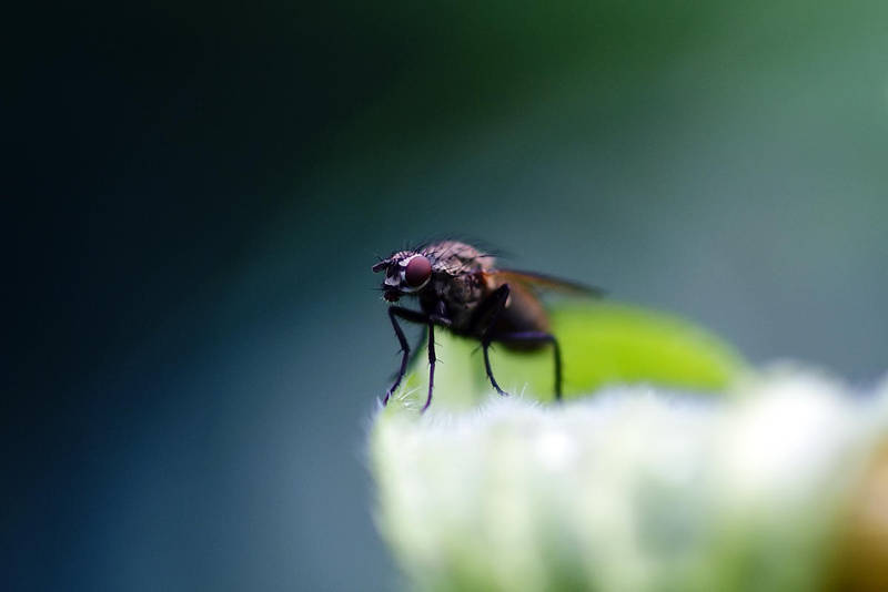 The Sleeping Fly markII by stofo