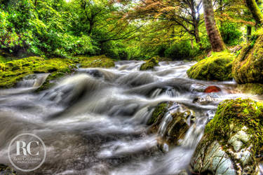 Tollymore Forest Park by rosscaughers