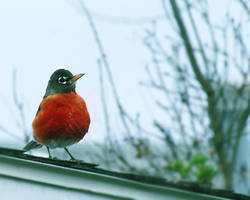 Watching the Nest by Yunaki-Yishu