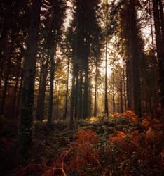 Mercian Dawn by colfrankland