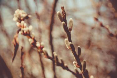 Spring by photographybyteri