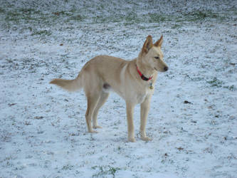 Snow Dog by ivorydragoness