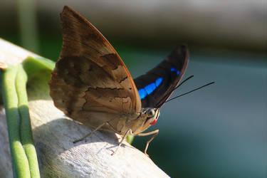 Butterfly by hv1234