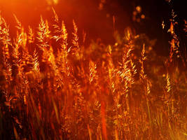 golden field 2 by crazytmac