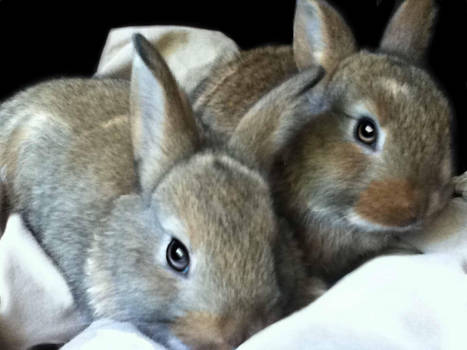 Bunnies by bunniesRawesome