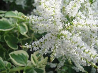 Botany3 by ZookTDribit