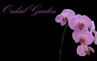 Orchid Wallpaper 2 by ZookTDribit