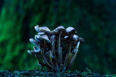 Fairytale Home by FlorisArt