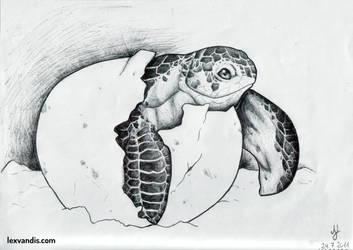 Turtle Birth by Lexvandis
