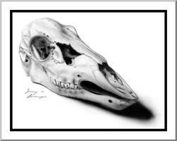 Deer Skull by Novastar2486