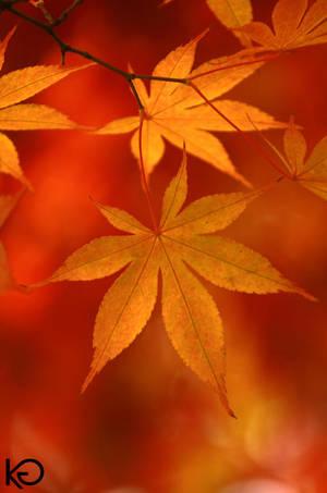 Fall Light by maisondezion