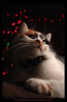 Christmas kitty by demony