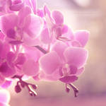 Orchid by Alyss6