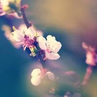 Blossom by Alyss6