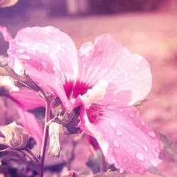 Summer Rain by Alyss6