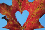 I Heart Fall by SnapWolf