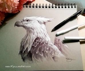 Gryphon study by KelleeArt