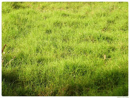 Grass Texture by levhita