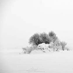 Isolated Island by Zemni