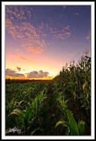 Farmlands Sunset II by mitchellkrog