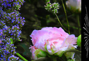 Garden raptures by Buble