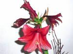 A Flowers Beauty by LovingDracula