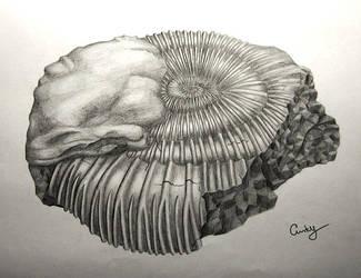 Ammonite by kiwikruemel
